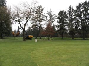 #1 pin oak 15
