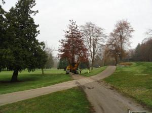 #1 pin oak 7