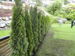 14 tee hedge 3